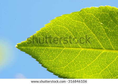 green leaf on a background of blue sky