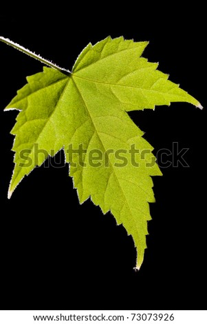Green leaf on a black background - stock photo