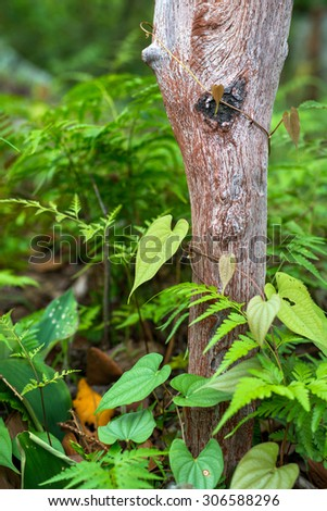 green leaf on a tree - stock photo