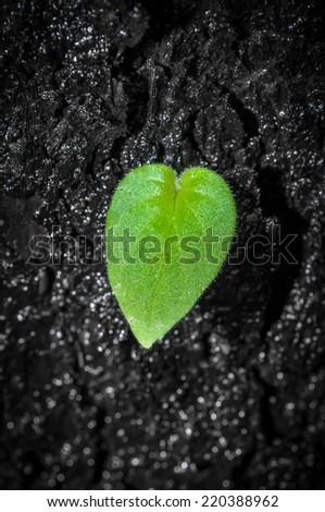 Green Leaf on Black Dead Wood - stock photo