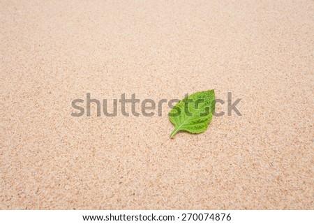 green leaf  on sand beach  - stock photo