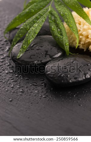 Green leaf on spa stone on wet black surface
