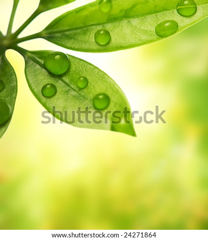 Green leaf over blurred background - stock photo