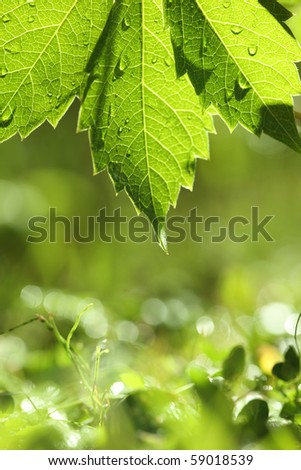 Green leaf over bright wet grass. Shallow DOF. - stock photo