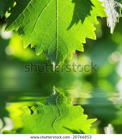 Green leaf over water reflection. Shallow DOF. - stock photo