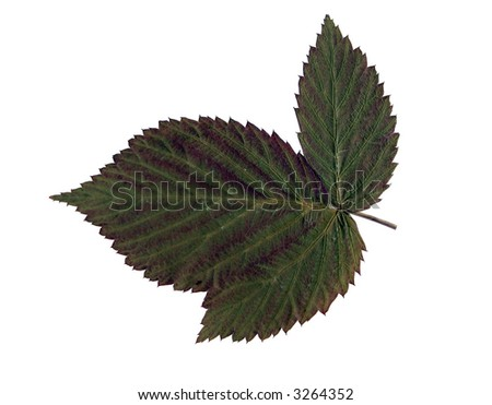 green leaf over white background - stock photo