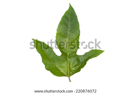 Green Leaf Passion Fruit close up , on white background  - stock photo