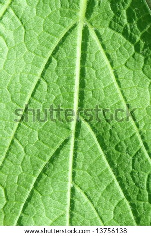 Green leaf removed close up