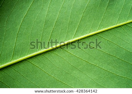 Green leaf texture, Background. - stock photo