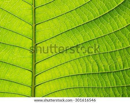 green leaf texture closeup - stock photo