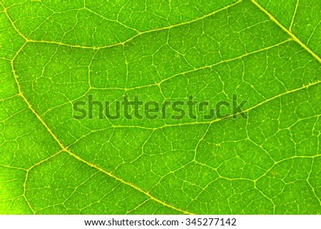Green Leaf Texture./ Green Leaf Texture - stock photo