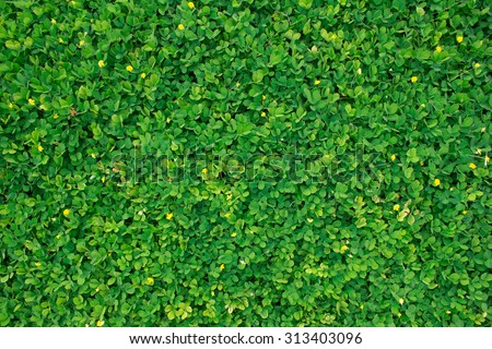 Green leaf texture/leaf texture background - stock photo