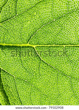 Green leaf texture, macro. ?bstract background   3 - stock photo