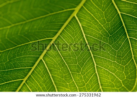 green leaf texture on white background - stock photo
