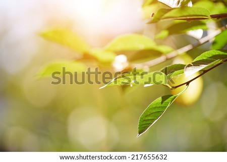 Green leaf under the sunlight. Horizontal photo - stock photo