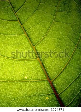 green leaf 4 vertical - stock photo