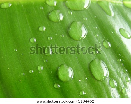 Green leaf with a drop of water - stock photo