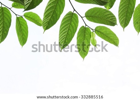 Green leaf with blank space on white background - stock photo
