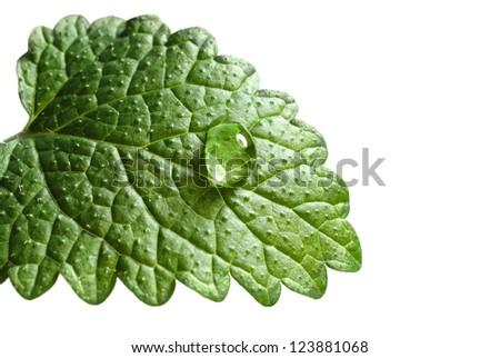 green leaf with drop isolated on white background