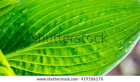 green leaf with drops of water in sunshine texture background close up macro - stock photo