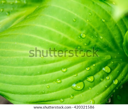 Green leaf with drops of water in sunshine texture background close up macro