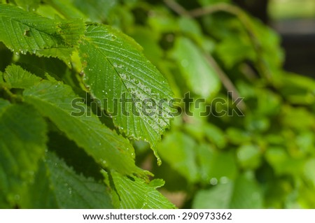 Green leaf with rain drop under sunlight