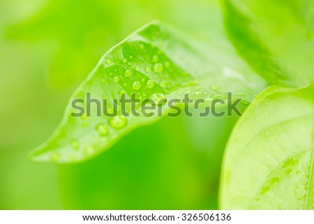 Green leaf with raindrops in rainy season