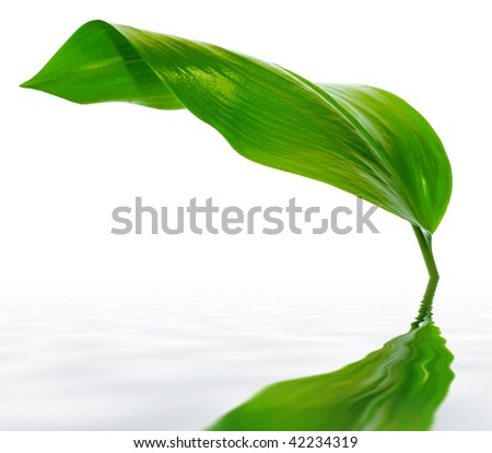 green leaf with reflection - stock photo