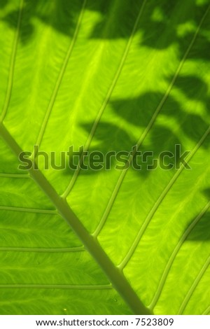 green leaf with shadow - stock photo