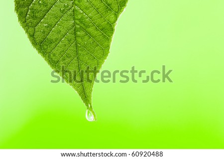 Green leaf with water droplet over water - stock photo