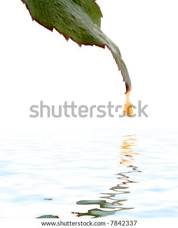 Green leaf with water droplet over water reflection - stock photo
