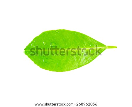 Green leaf with water droplets, closeup. - stock photo