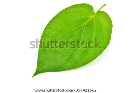Green leaf with water droplets,Closeup isolated on white background