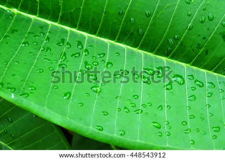 green leaf with water drops after summer rain - stock photo