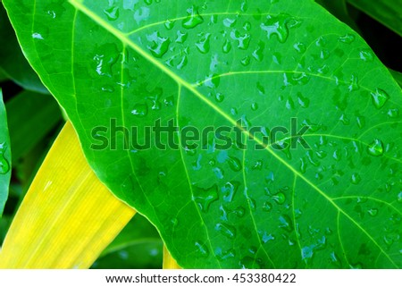 green leaf with water drops after summer rain