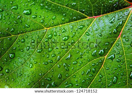 Green leaf with water drops and reflections