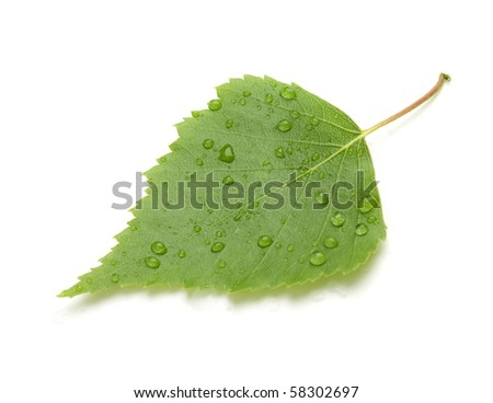 Green leaf with water drops and shadow. Isolated on white background - stock photo