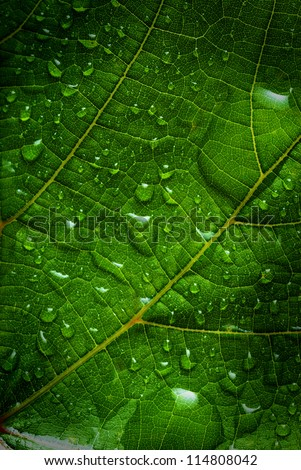 green leaf with water drops close up - stock photo