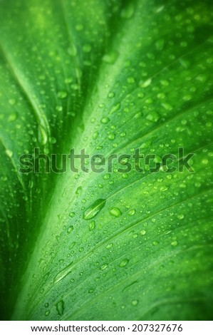Green leaf with water drops close-up. Shallow DOF. - stock photo
