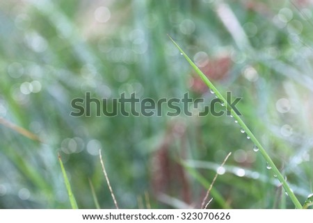 green leaf with water drops effect green, drops of dew on a green grass - stock photo