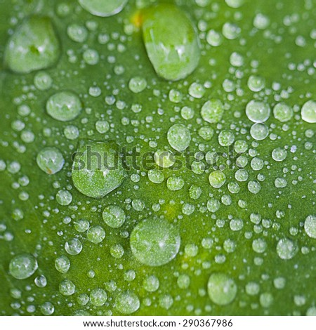 Green leaf with water drops for background - stock photo