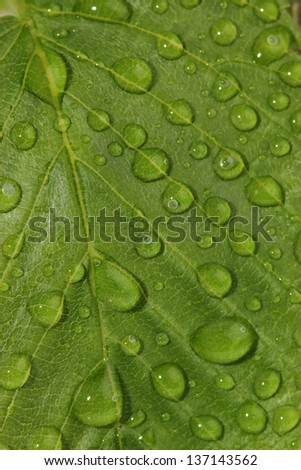 Green leaf with water drops. macro