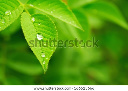 Green leaf with water drops, macro, nature background - stock photo