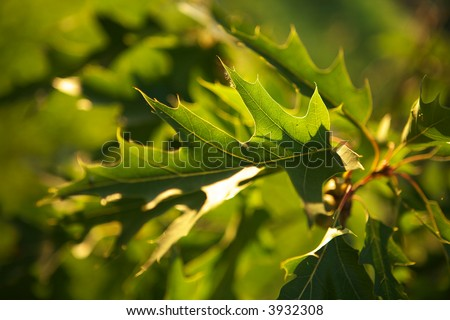 Green leafs background texture