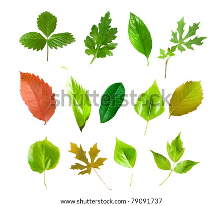 Green leafs collection isolated over white