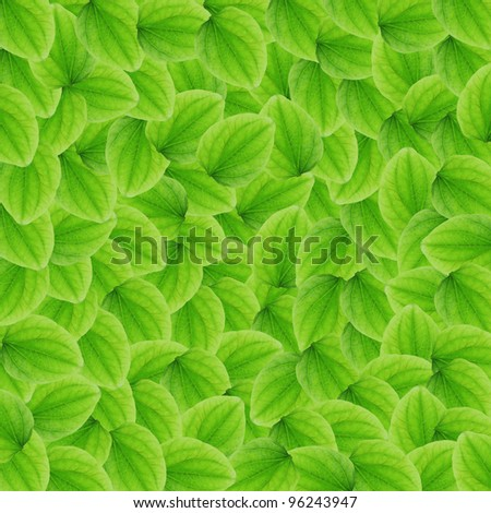 Green leafs for background ,texture and patten