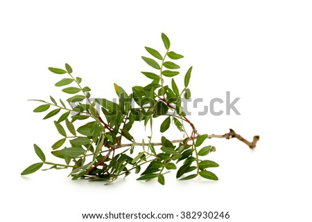 Green leafs isolated on a white background