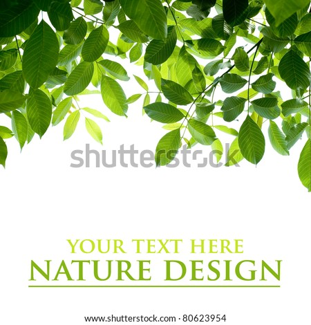 green leafs isolated on white background - stock photo
