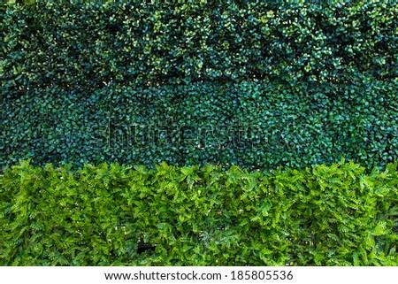 Green leafs wall - stock photo