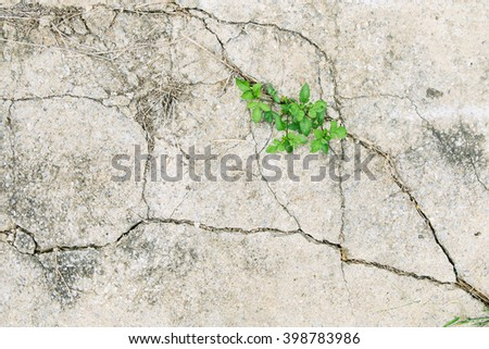 green leave in dried cracked mud - stock photo